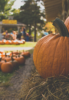 Fall in Love with Leslieville this Autumn